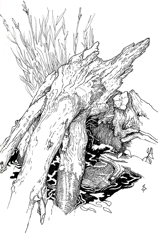 A pen and ink drawing of a fallen tree half-immersed in water, with rocks scattered at its base and a clump of tall wild grass behind it.