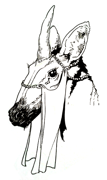 A pen and ink profile of an equine head with a bright dark eye and thick eyelashes. A veil on a thin chain of beads covers most of the head but drapes down to reveal the eye above it.